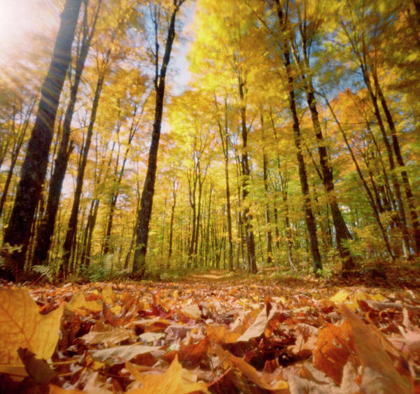 Vermont Photograph - Golden Forests Of Vermont by Wendi Andrews