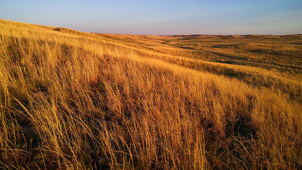 Photograph - Golden Grass by Carl Young