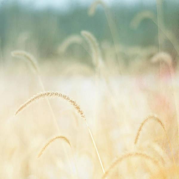 Wall Art - Photograph - Golden Grasses by Trina Dopp Photography