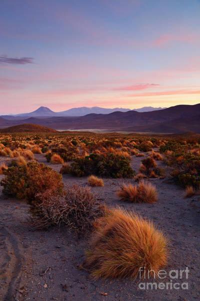 Photograph - Golden Grasslands At Sunset Isluga National Park Chile by James Brunker