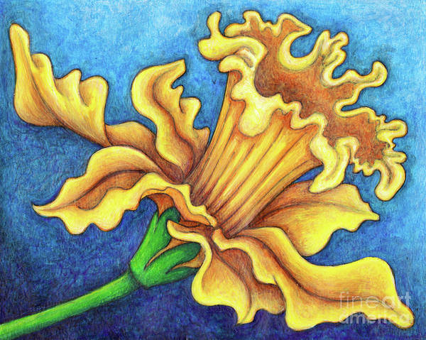 Painting - Golden Harvest Daffodil by Amy E Fraser