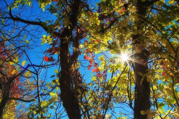 Photograph - Golden Leaves And Sunburst by Tatiana Travelways