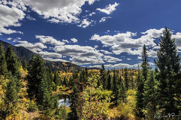 Photograph - Golden Leaves by Dennis Dempsie