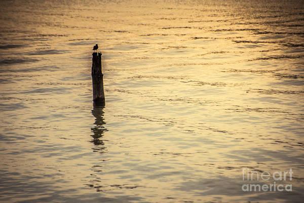 Photograph - Golden Light - Lake Coeur D'alene by Matthew Nelson