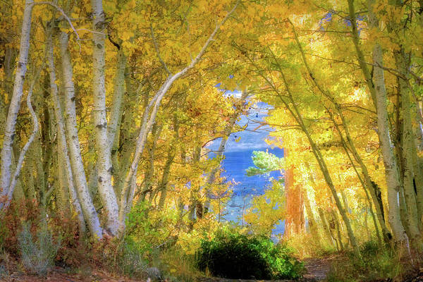 Wall Art - Photograph - Golden Pathway by Donna Kennedy