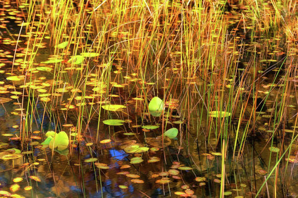 Art Print featuring the photograph Golden Pond by Dee Browning