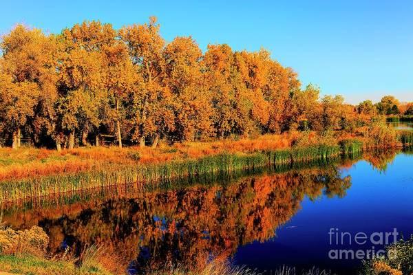 Photograph - Golden Reflections by Jon Burch Photography