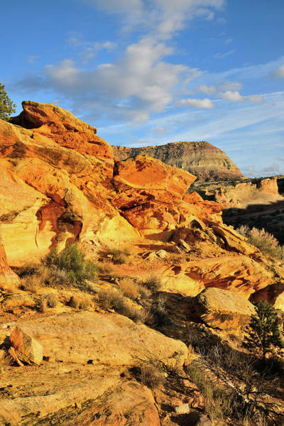 Photograph - Golden Sandstone Hills Along Rim Rock Drive by Ray Mathis