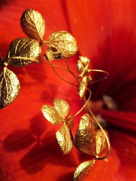 Photograph - Golden Shadow by Rosita Larsson