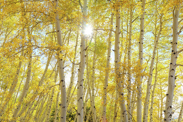 Photograph - Golden Sunshine On An Autumn Day by James BO Insogna