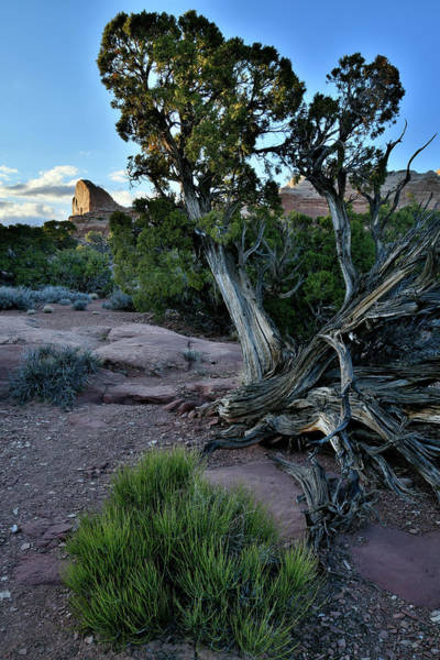 Photograph - Golden Thumb At Green River Overlook In Canyonlands by Ray Mathis