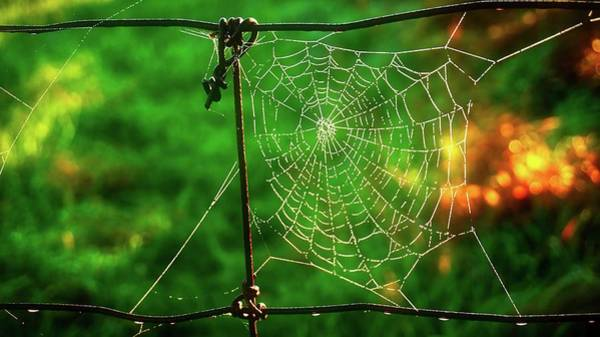 Photograph - Golden Web by Bryan Smith