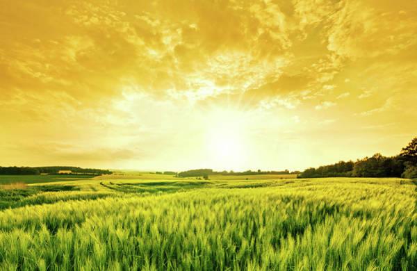 Photograph - Golden Wheat Landscape by Nikada