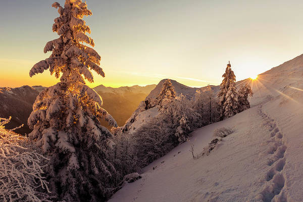 Photograph - Golden Winter by Evgeni Dinev