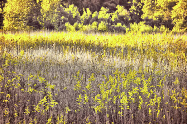 Photograph - Goldening by Jamart Photography