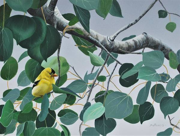 Painting - Goldfinch And Aspen by Peter Mathios