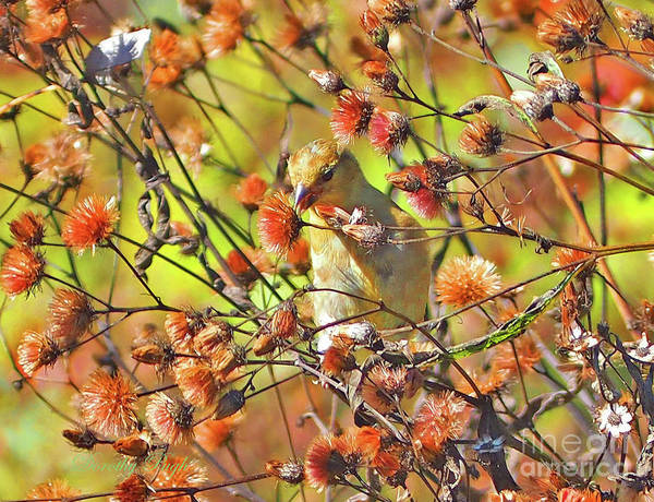 Photograph - Goldfinch In Autumn by Dorothy Pugh