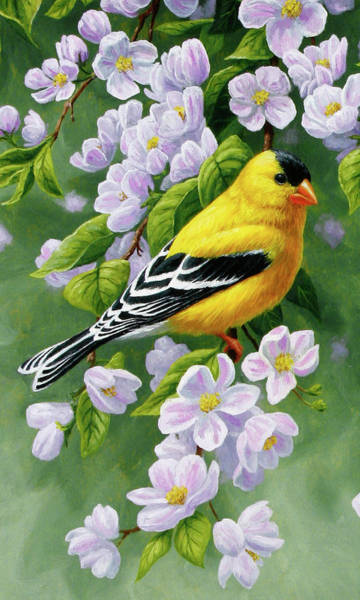 Goldfinch Wall Art - Painting - Male American Goldfinch And Apple Blossoms by Crista Forest