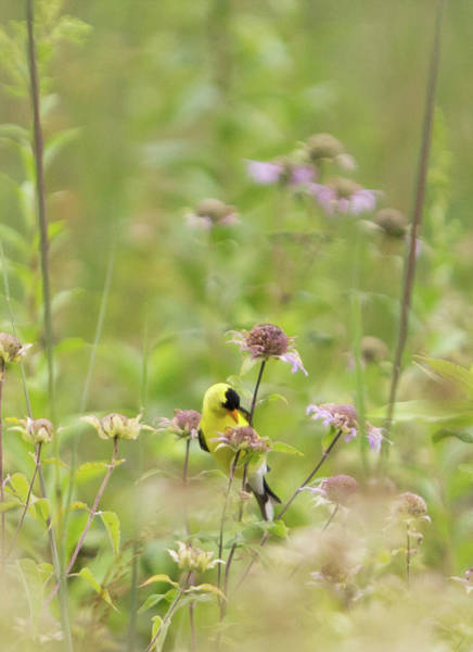 Photograph - Goldfinch Wildflowers - Vertical  by Patti Deters