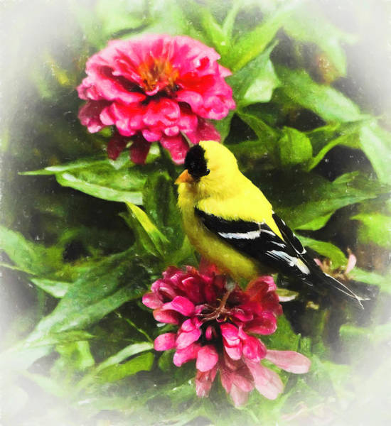 Photograph - Goldfinches Love Zinnias by Ola Allen