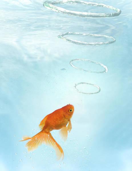Bubble Photograph - Goldfish Blowing Bubble Rings by Zena Holloway