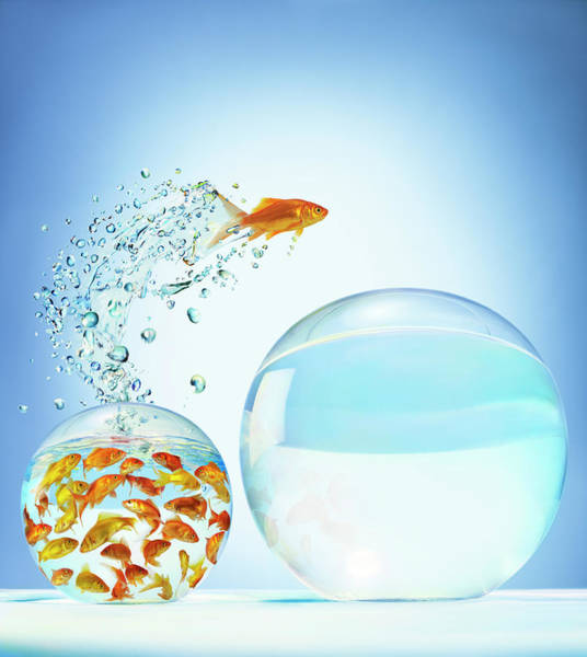 Determination Photograph - Goldfish Jumping Out Of Overcrowded by Gandee Vasan