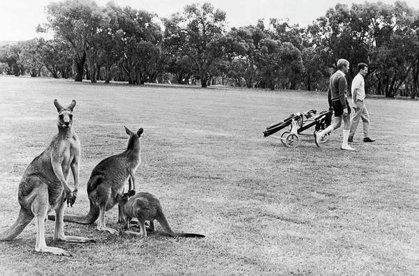 Australia Photograph - Golf Course In Australia To 1970 by Keystone-france