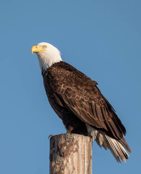 Photograph - Good Morning America by Loree Johnson