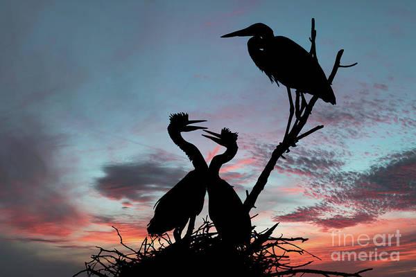 Wall Art - Photograph - Good Morning Early Birds by John Absher