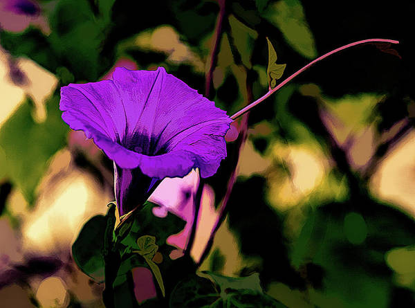Photograph - Good Morning Glory by Gaylon Yancy