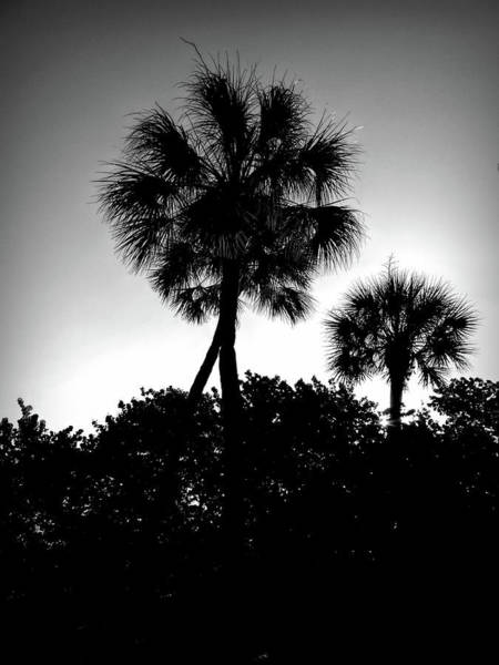 Photograph - Good Morning Palms by Robert Stanhope