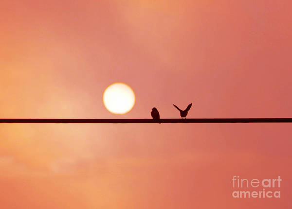 Wall Art - Photograph - Good Morning Sunshine by Rodger Painter