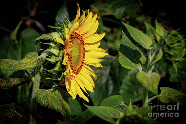 Wall Art - Photograph - Good Morning Sunshine by William Norton