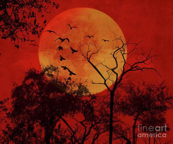 Digital Art - Good Night Birds by Carlos Diaz