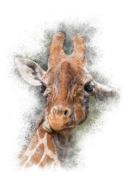 Photograph - Giraffe Portrait #2 by Patti Deters