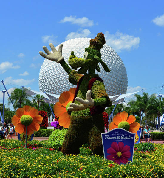 Epcot Center Wall Art - Photograph - Goofy Topiary At Epcot by David Lee Thompson