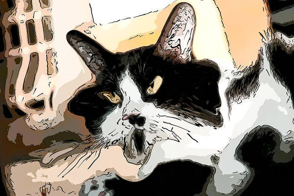 Digital Art - Goofy Tuxedo Cat Color by Don Northup