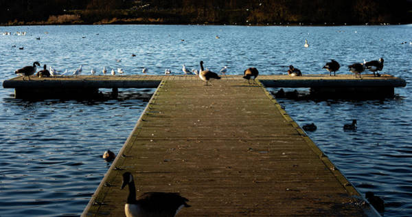 Photograph - Goose And Seagull Jetty by Scott Lyons