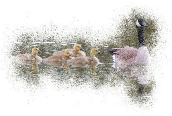 Photograph - Goose Family - Following by Patti Deters