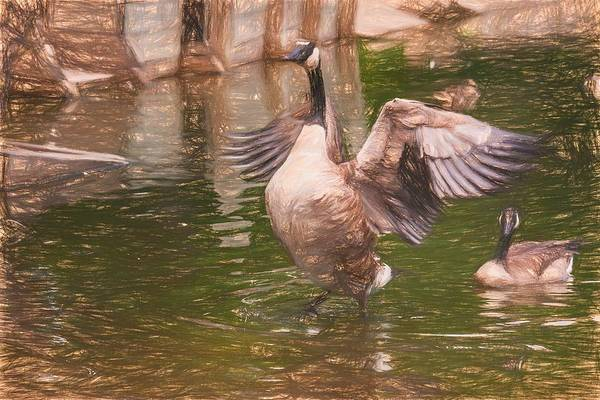 Photograph - Goose Spreading Wings Colored Pencil by Don Northup