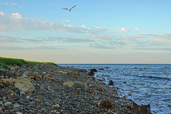 Photograph - Gooseberry Island Seagull Westport Ma by Toby McGuire