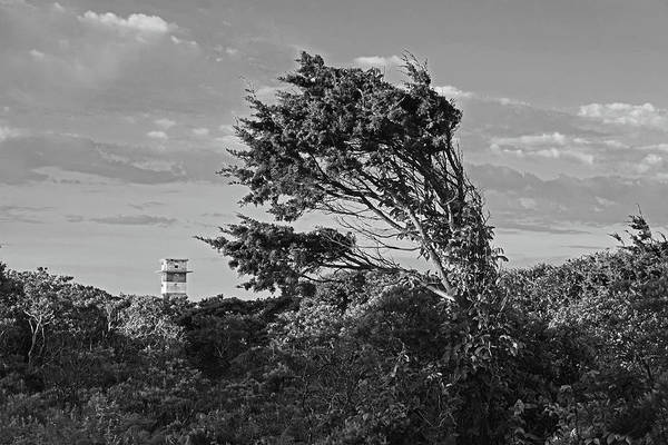 Photograph - Gooseberry Island Tree Westport Ma Tower Black And White by Toby McGuire