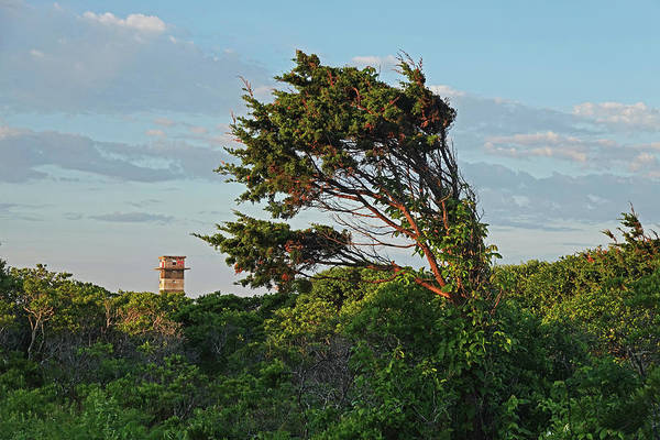 Wall Art - Photograph - Gooseberry Island Tree Westport Ma Tower by Toby McGuire
