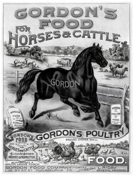 Wall Art - Photograph - Gordon's Horse, Cattle And Poultry Food 1880 by Daniel Hagerman