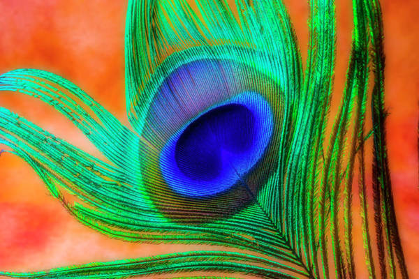Wall Art - Photograph - Gorgeous Peacock Feather by Garry Gay