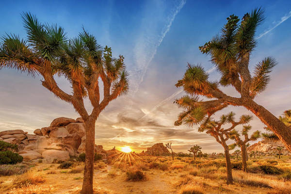 Wall Art - Photograph - Gorgeous Sunset At Joshua Tree National Park by Melanie Viola