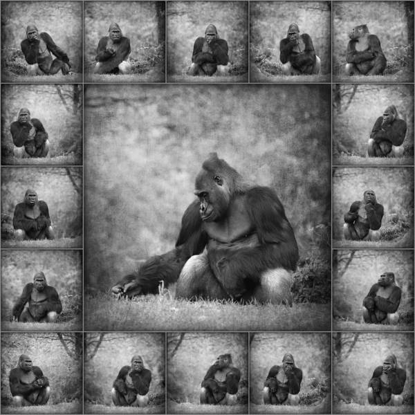 Wall Art - Mixed Media - Gorilla Collage by Heike Hultsch