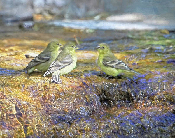Finch Photograph - Gossip At The Watering Hole by Donna Kennedy