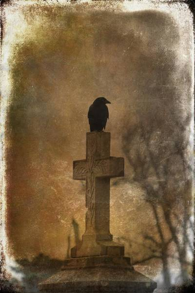 Wall Art - Photograph - Goth Crow by Gothicrow Images