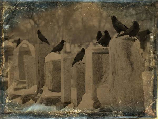 Wall Art - Photograph - Row Of Gothic Crows by Gothicrow Images